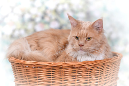 ROUND WICKER BED FOR A CAT