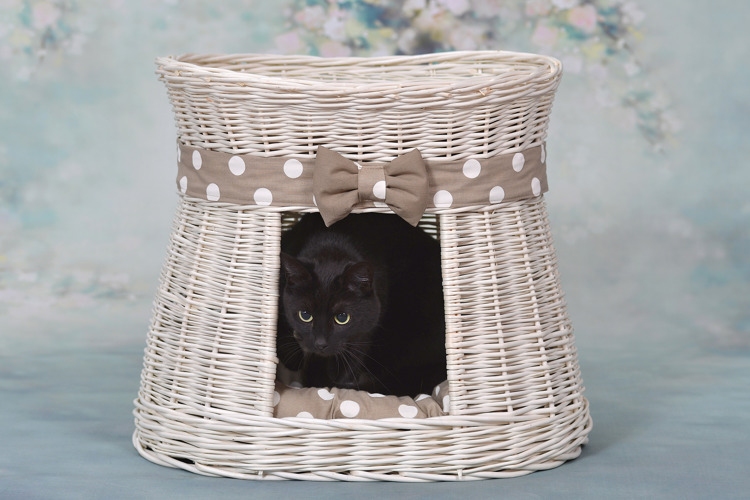 ovale katzenh tte in beige katzenkorb aus weide mit zwei etagen und kissen katzenturm. Black Bedroom Furniture Sets. Home Design Ideas
